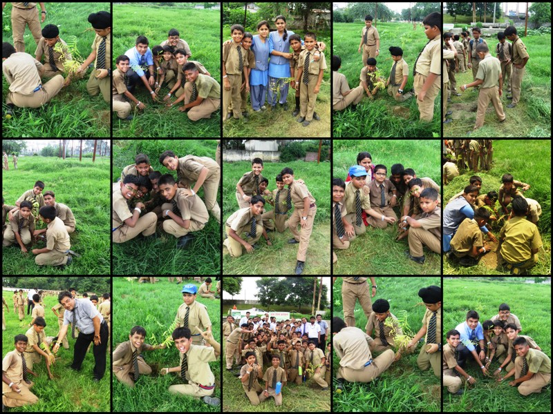Plantation Drive at Fairy dale 2014-1 (1)