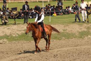 Equestrian Dispaly 2019 6